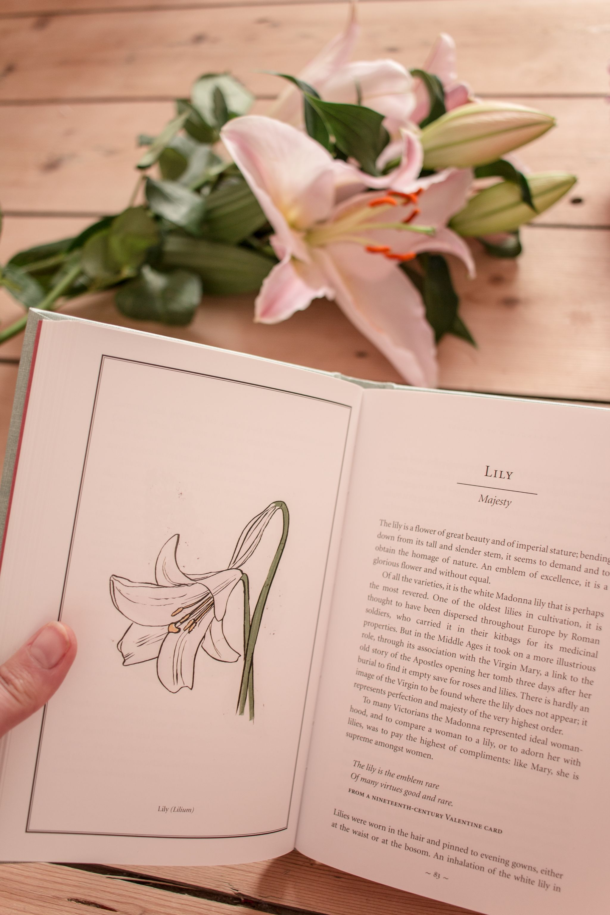 meaning-behind-lily-flower
